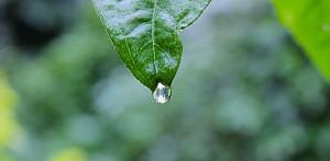 homeopatia plantas